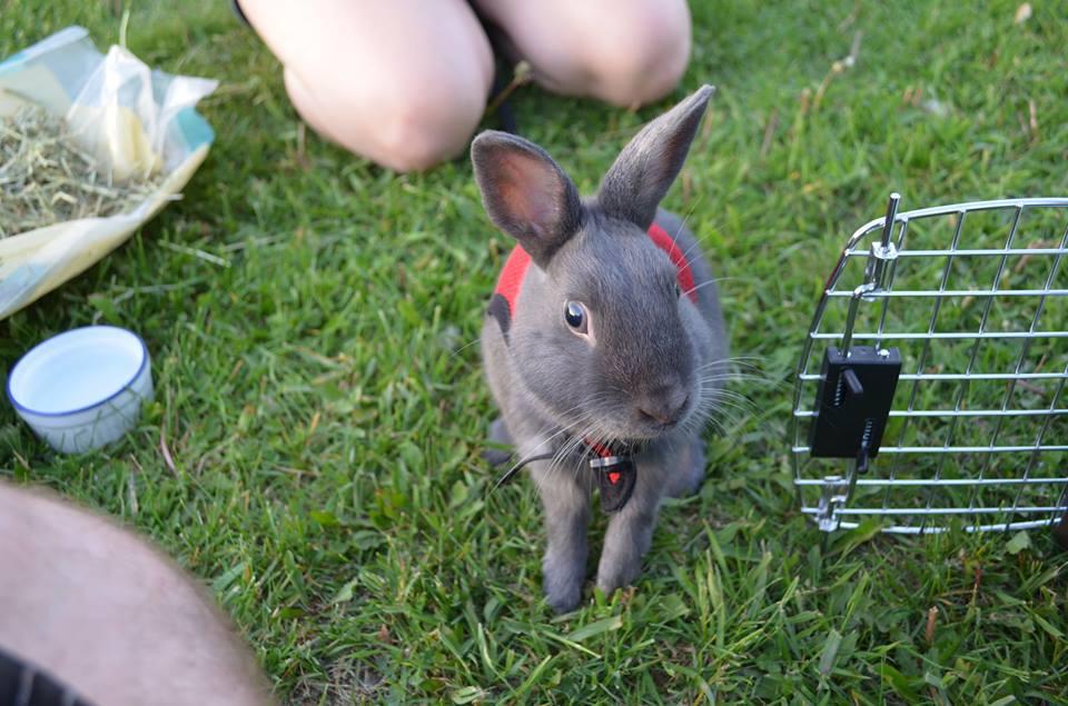 Les lapins dans la nature for Exterieur lapin