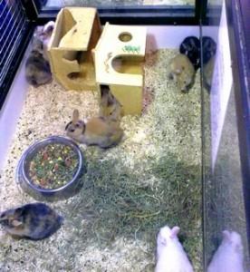 acheter son lapin en animalerie