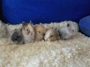 adopter un lapin en élevage