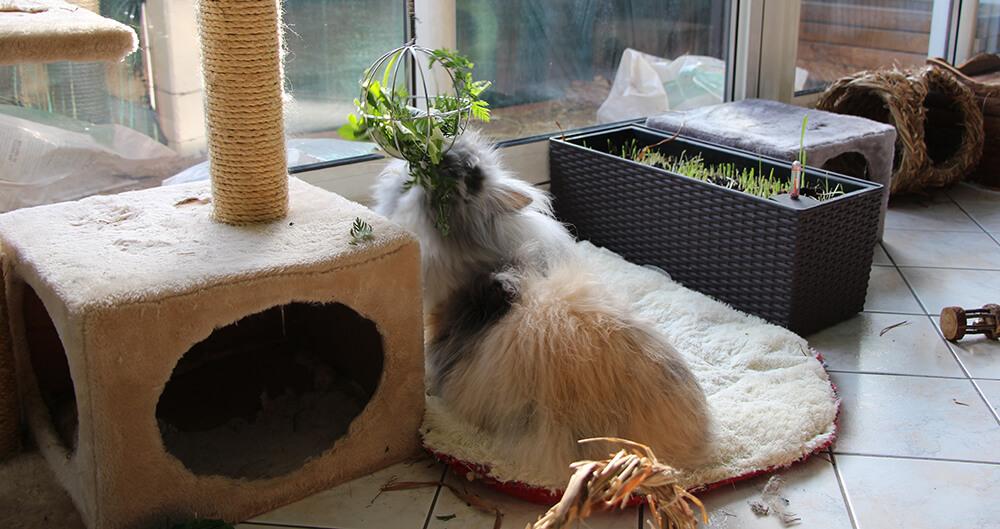 Légume dans boule à foin pour lapin
