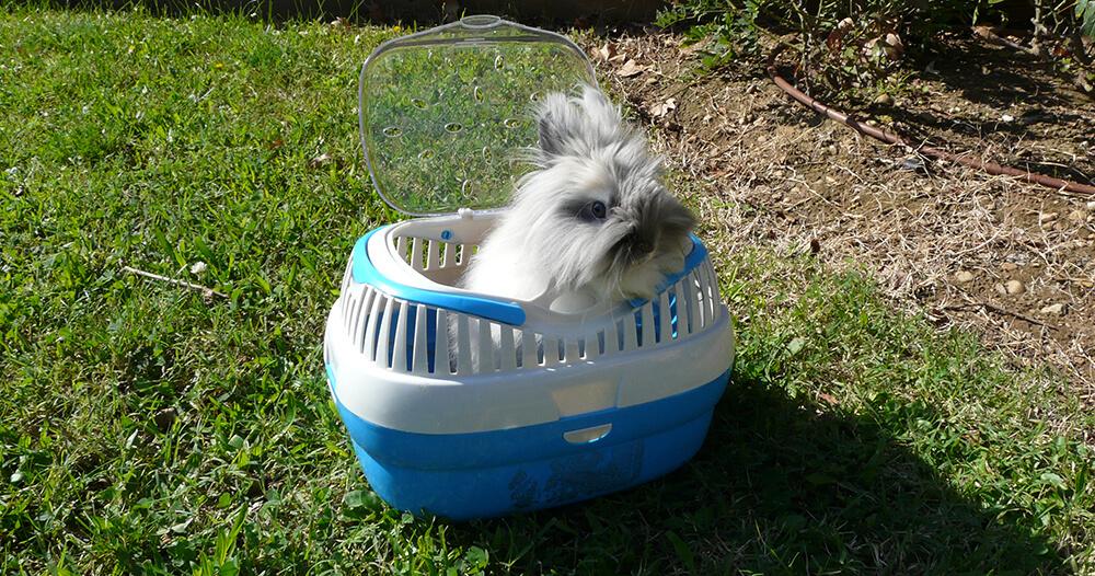 Cage de transport pour lapin