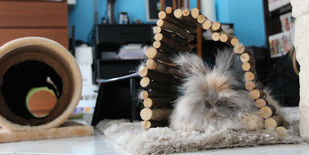 Pitchoune ma lapine sous son pont en bois