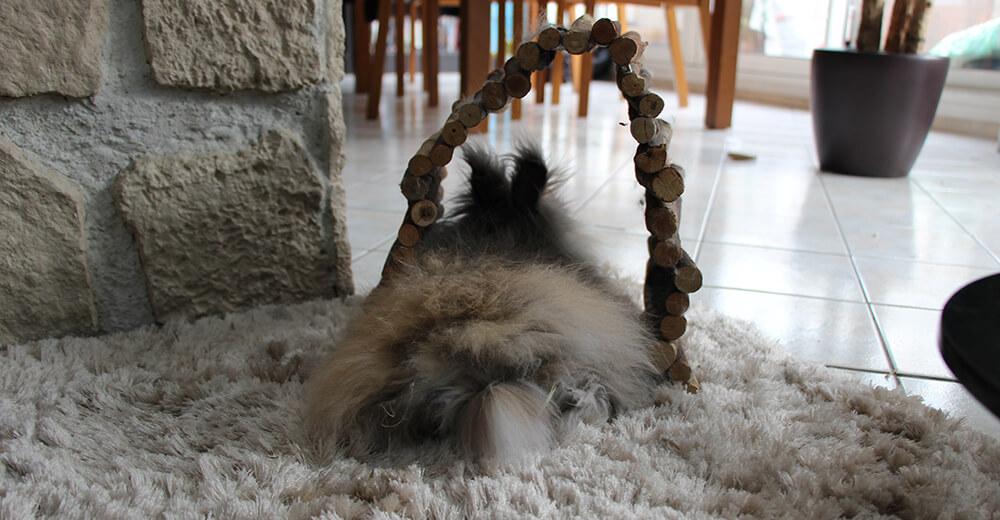 lapin sur tapis
