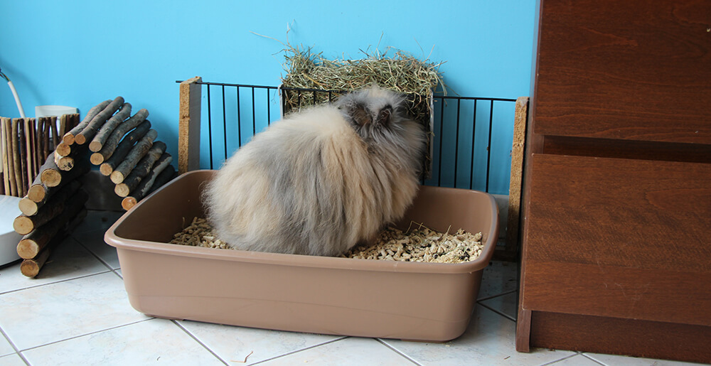 Bac à litière pour lapin