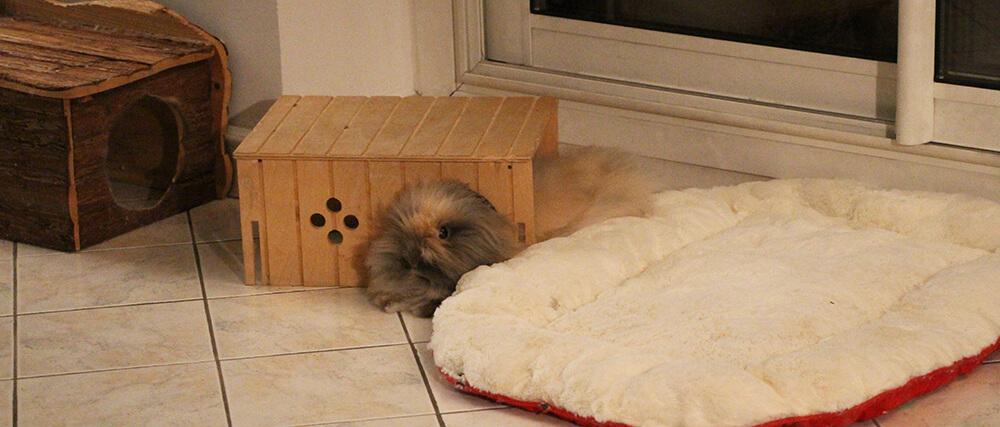 maisonnette pour lapin