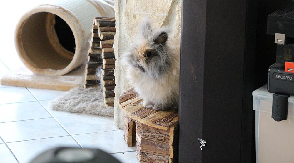 Maisonnette en bois pour lapin