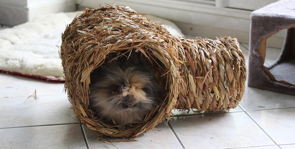 jeu pour lapin, tunnel en foin pour lapin