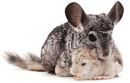 Relativ Quel animal de compagnie adopter ? YV73