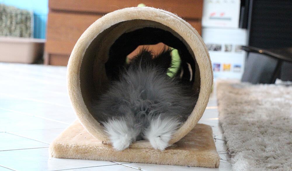 Lapin dort dans son tunnel à lapin