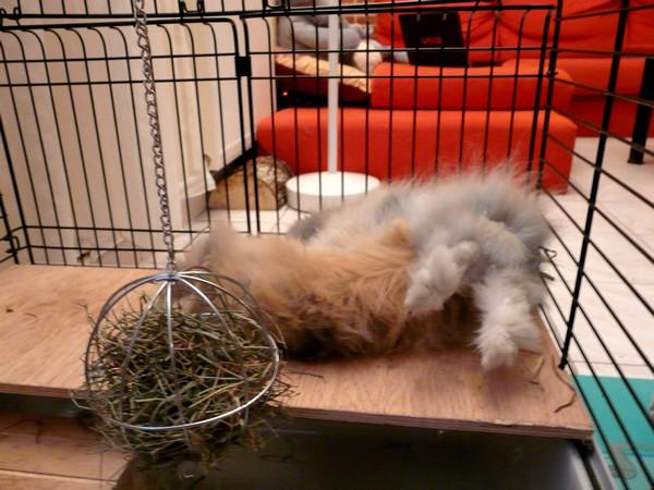 Cohabitation réussie entre lapins