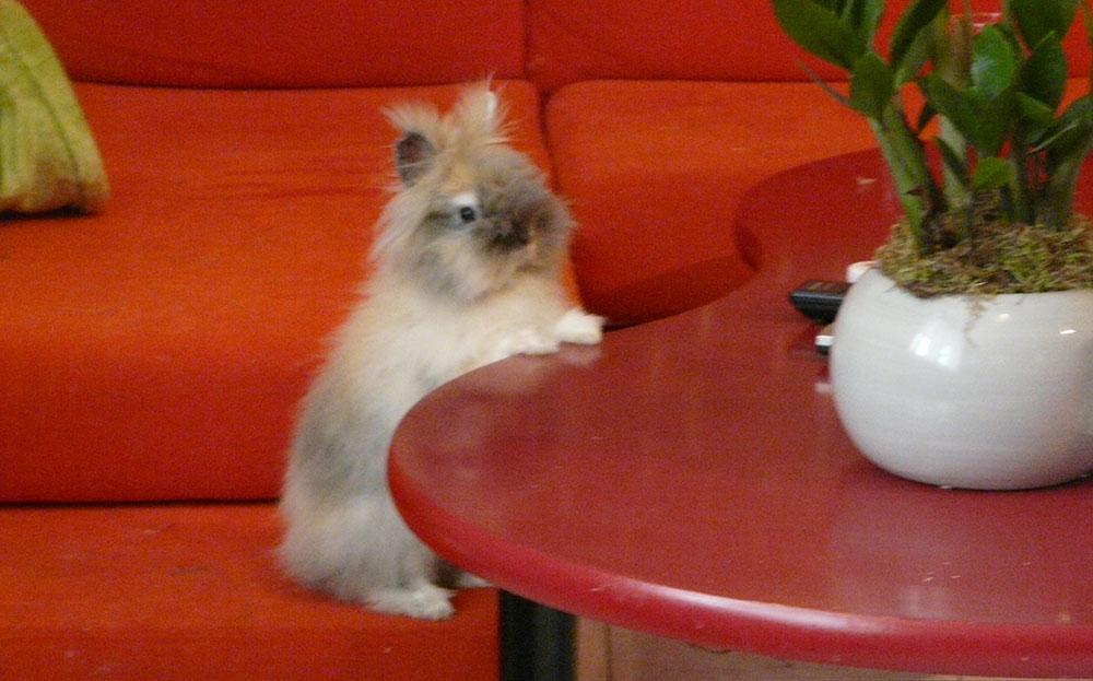 Gribouille attend son repas !