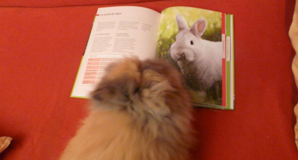 Pitchoune ma lapine angora lit