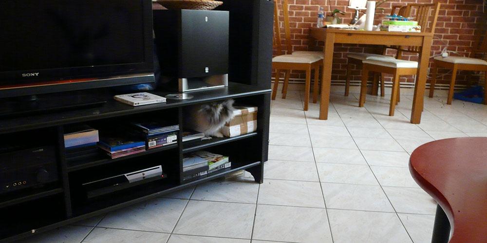 Mon lapin nain Gribouille caché dans le meuble télé