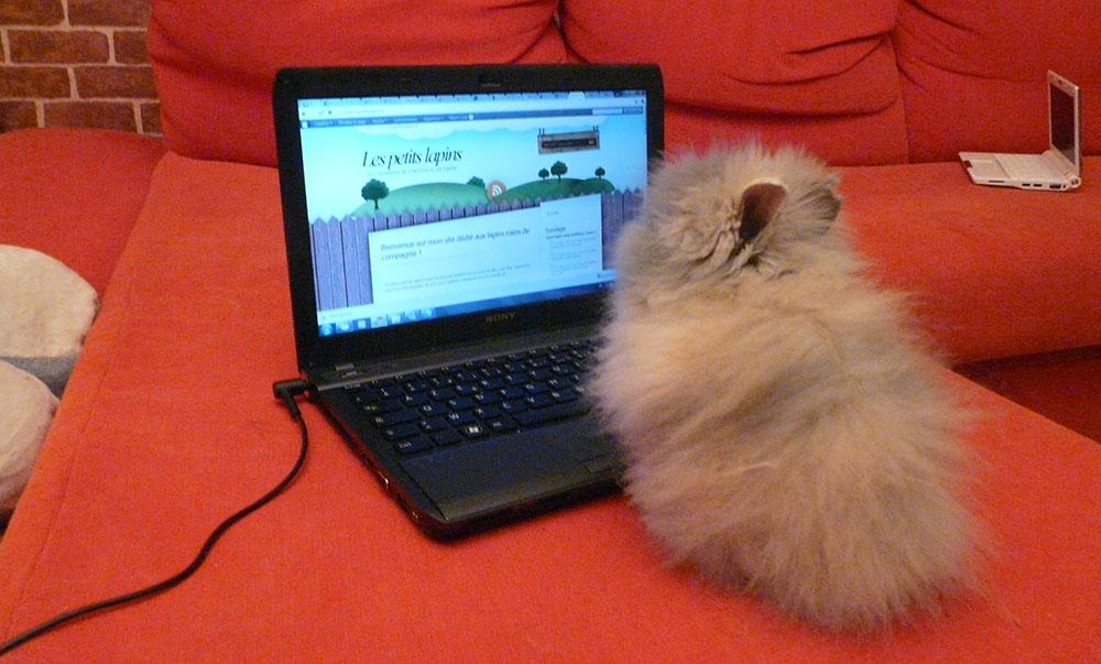 Gribouille ma lapine sur l'ordinateur