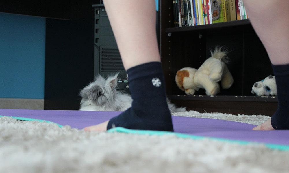 Mon lapin fait du sport avec moi ! Intense.