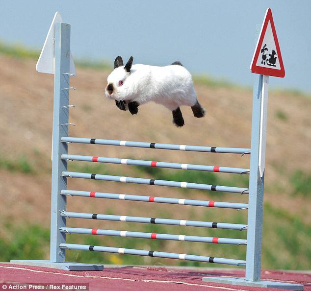 Le saut de lapin les petits lapins - Comment couper les griffes d un lapin ...
