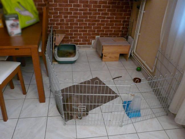 guimly est de retour les petits lapins. Black Bedroom Furniture Sets. Home Design Ideas