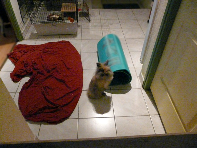 Pitchoune ma lapine au milieu du couloir