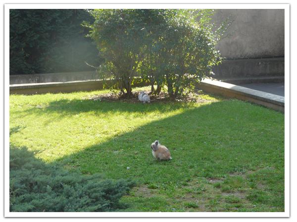 Il y a des lapins dans le jardin de l 39 immeuble les - A poil dans son jardin ...