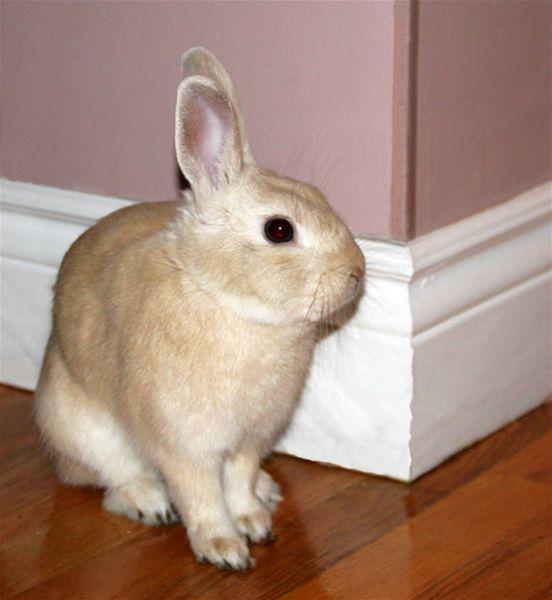 Une nouvelle vie pour ce petit lapin rescapé