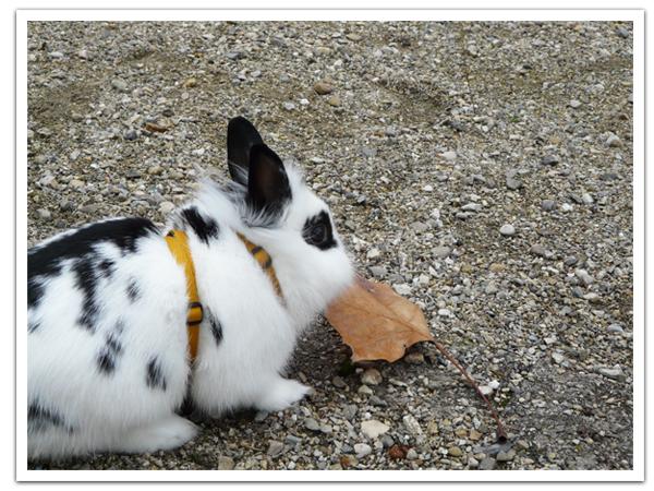 Les petits lapins tous dans le jardin !