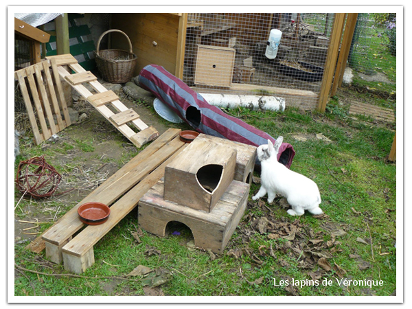 L 39 levage de v ronique le paradis des lapinous les petits lapins - Jeux pour lapin a fabriquer ...