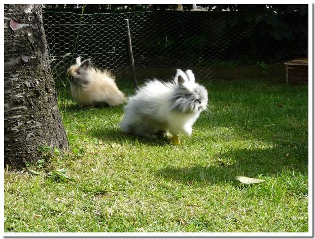 Les lapines en vacances pour l'Ascension