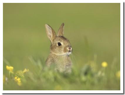 Tout le monde s'arrêtent pour laisser passer le petit lapin