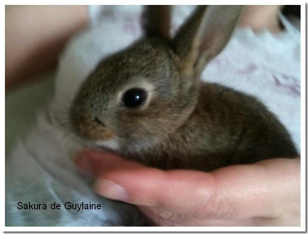 Une nouvelle vie pour ce lapin rescapé