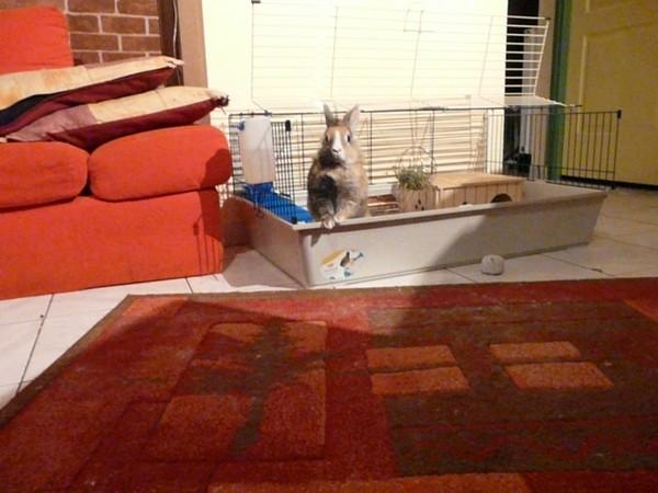 aider les lapins abandonn s plusieurs moyens possibles les petits lapins. Black Bedroom Furniture Sets. Home Design Ideas