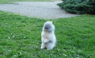 Bébé lapin nain