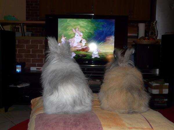 Samedi soir, soirée télé pour les lapines !