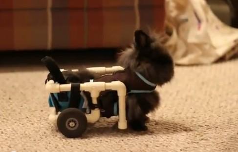 Lily, petite lapine handicapée