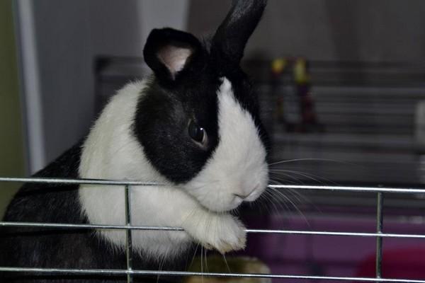 Antonia, la sauveuse de lapins