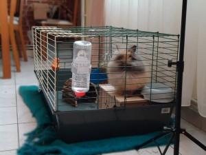 Cage à lapins
