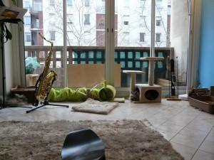 Liberté totale de mes lapins en appartement