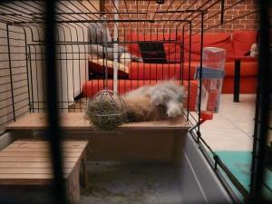 Gribouille dormant sur Pitchoune les pattes en l'air !