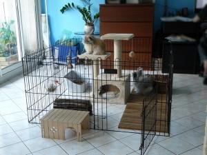Parc à lapins, enclos pour lapins