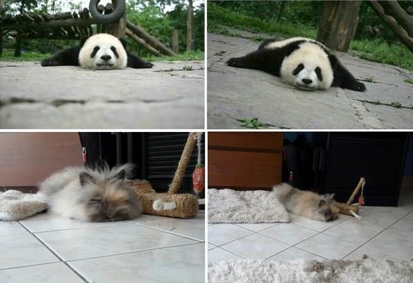 Mon lapin est un panda