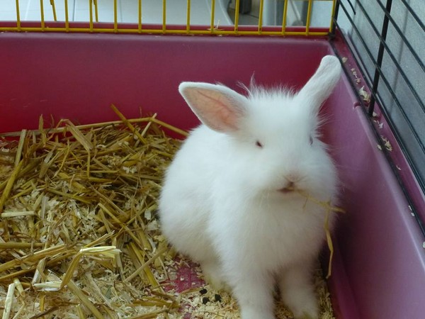 Sauvetage d'un lapin égaré