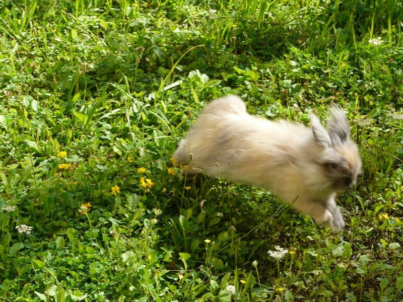 Mes lapines dans la nature