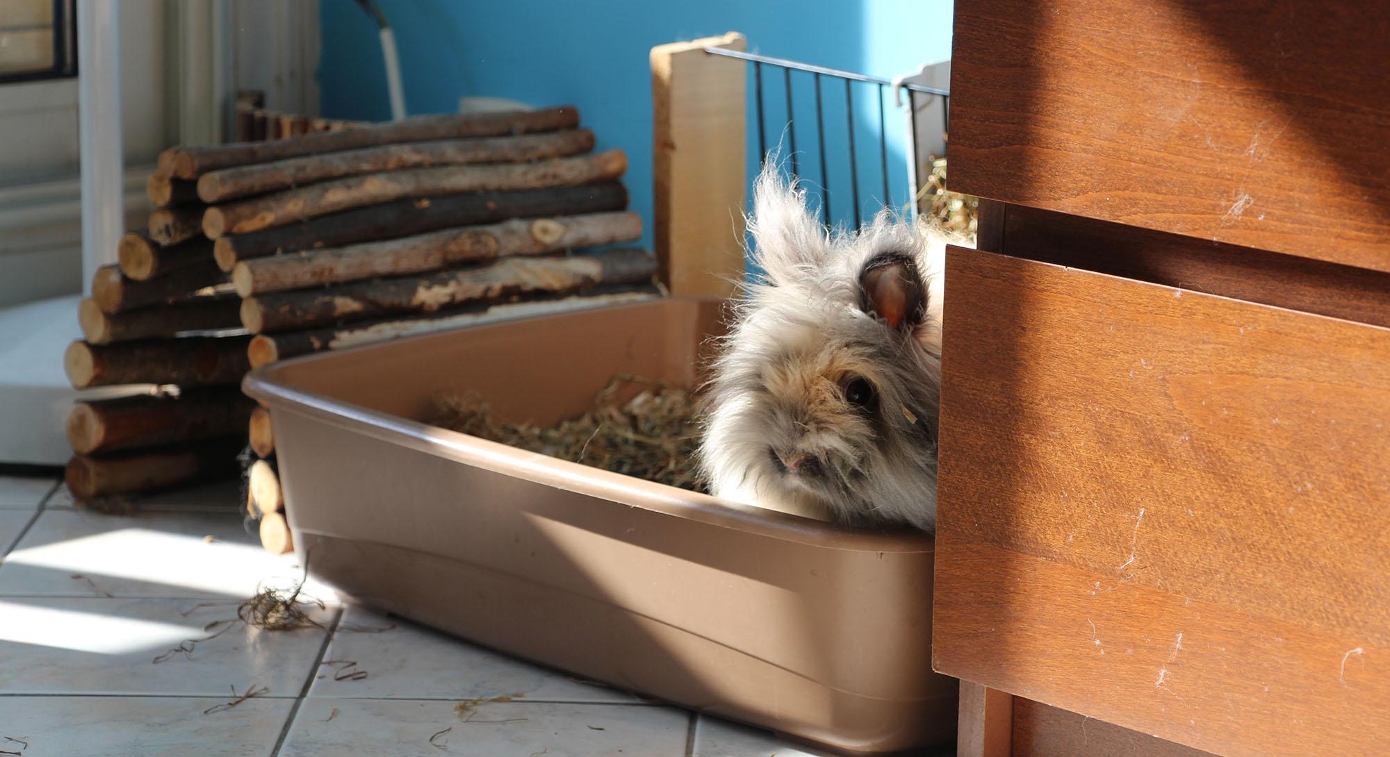 eduquer son lapin tre propre les petits lapins. Black Bedroom Furniture Sets. Home Design Ideas