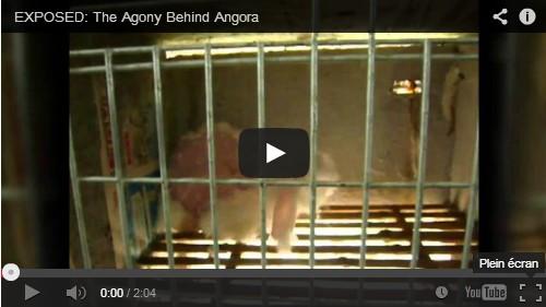angora-whool-torture