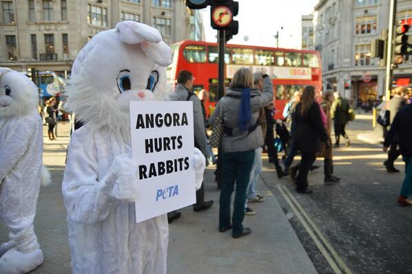 Contre la torture des lapins angoras, les magasins réagissent