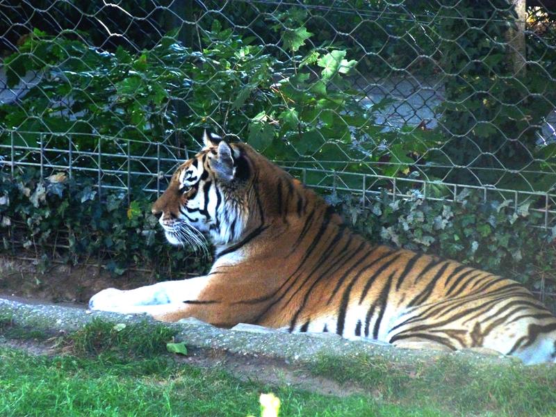 Débat : zoo, pour ou contre ?