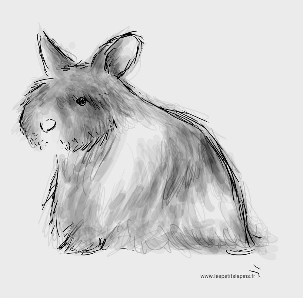 dessin de Gribouile, lapin nain angora