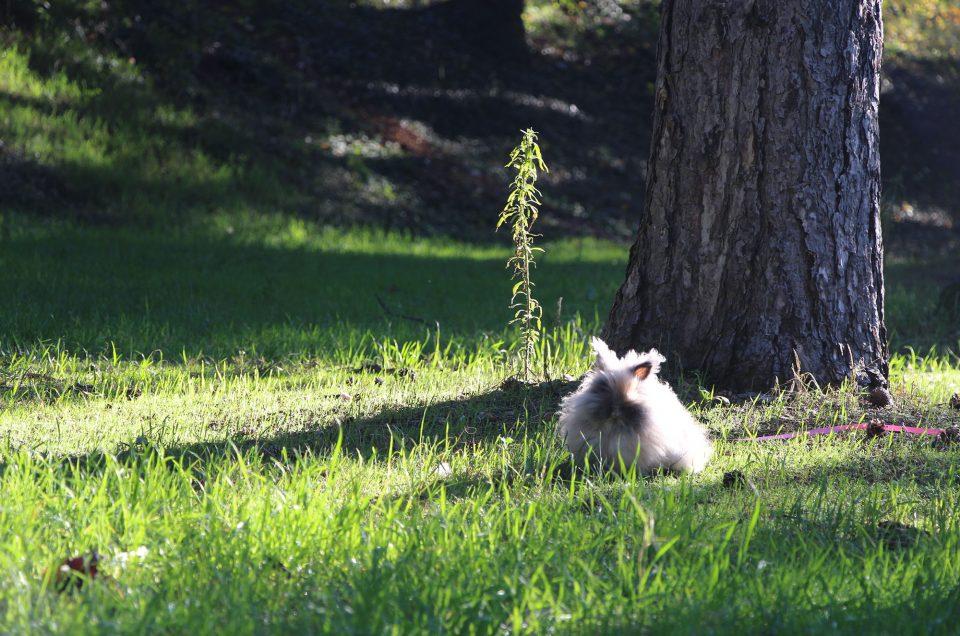 Instant de frayeur au parc