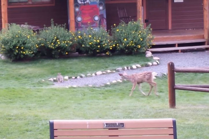 Un faon et un lapin jouent ensemble, comme un air de bambi