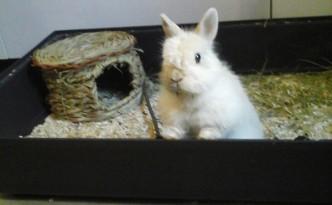 Pilou, petit lapin abandonné qui cherche une famille