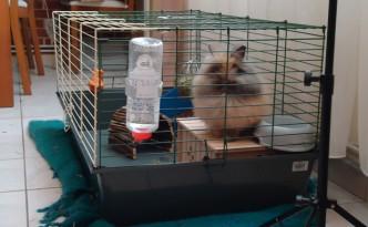 Pitchoune, mon lapin nain en cage
